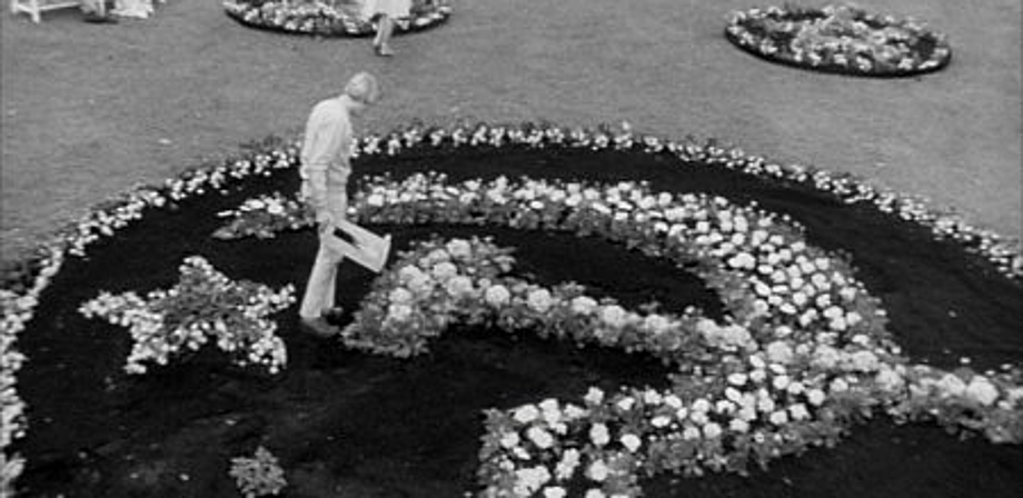 British 60s Cinema Morgan A Suitable Case For Treatment